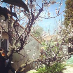 Le printemps arrive ..
