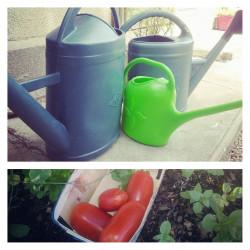 débuter dans le mode du jardinage