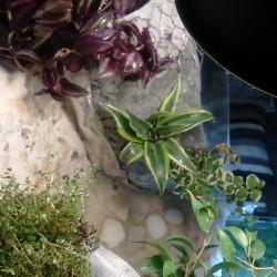 DIY : mur végétal