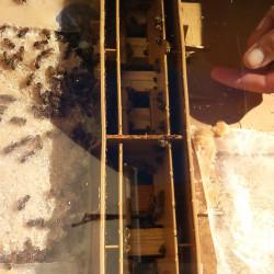 Une ruche dans notre jardin